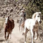 Running of the Horses- Baja Rancho La Bellota