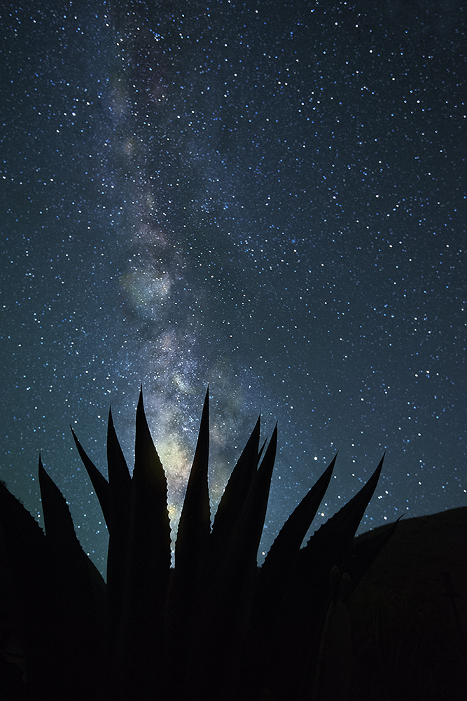 stary-night-and-desert-catus-by-by-eileen-mandell