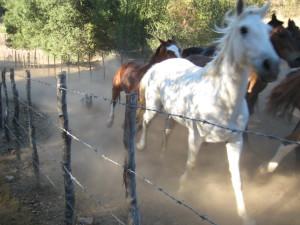horses free 4