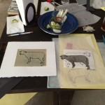 sheep drawing & print